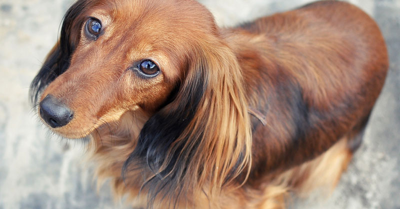 cute-animals-dogs-THUMB.jpg