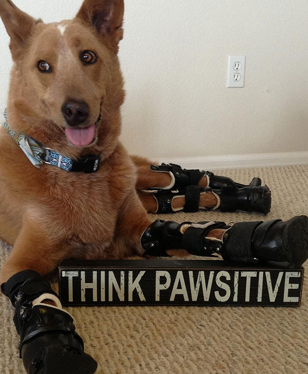 cute_bionicdog3.jpg