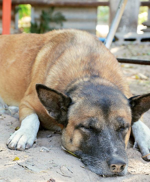 cute_blinddog1.jpg