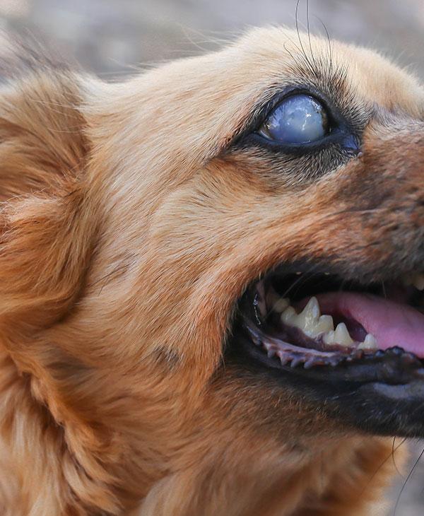 cute_blinddog2.jpg