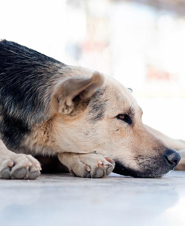 cute_blinddog3.jpg
