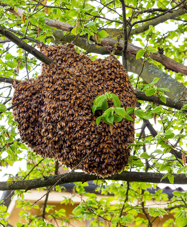 cute_bees.jpg