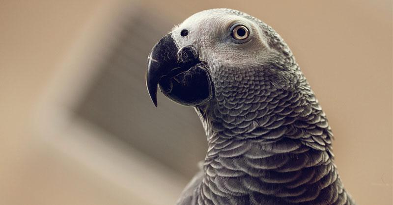 cute-animals-birds-THUMB.jpg