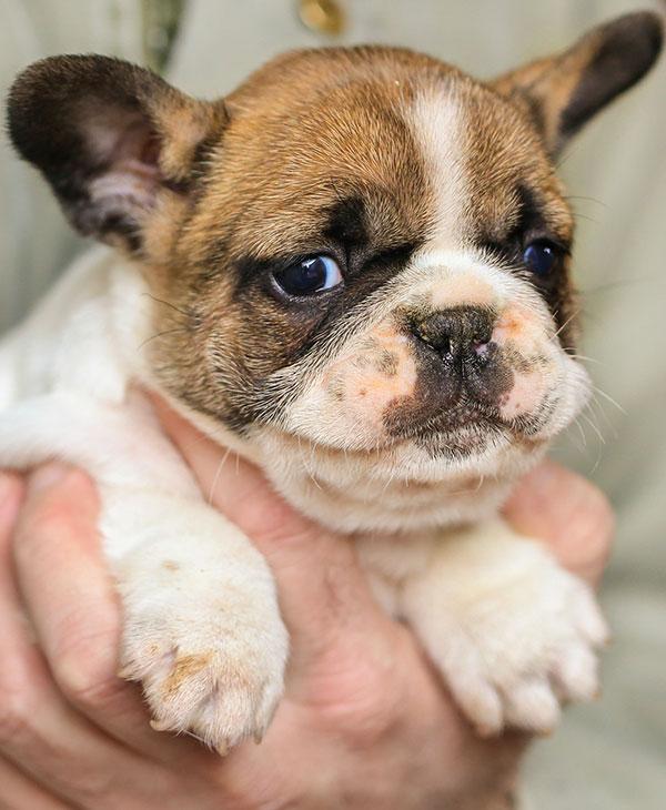 cute_minidog1.jpg