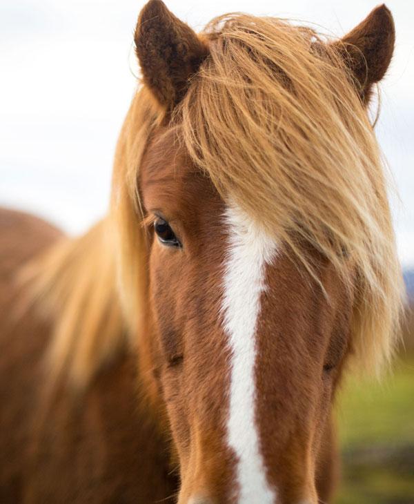 cute-horses-funny-2.jpg