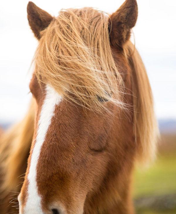 cute-horses-funny-3.jpg