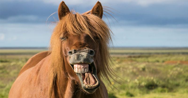 cute-horses-funny-THUMB.jpg