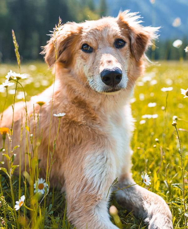 cute-stray-dog-forward-look.jpg