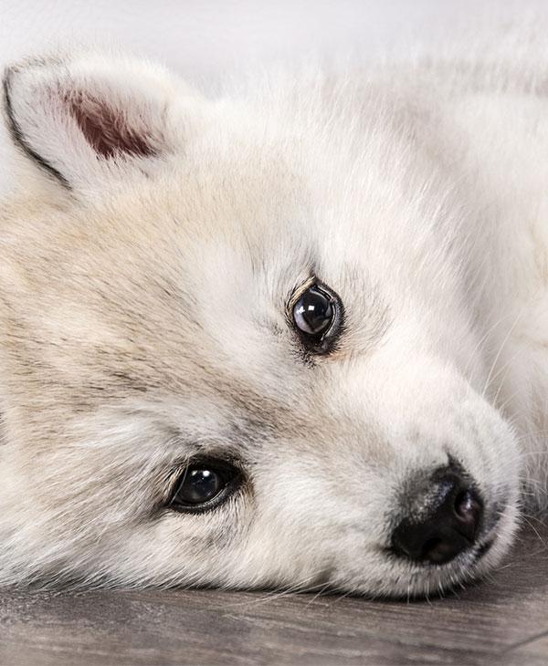 cute-puppies-funny-3.jpg