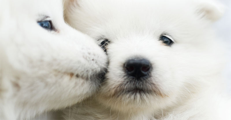 cute-puppies-funny-THUMB.jpg