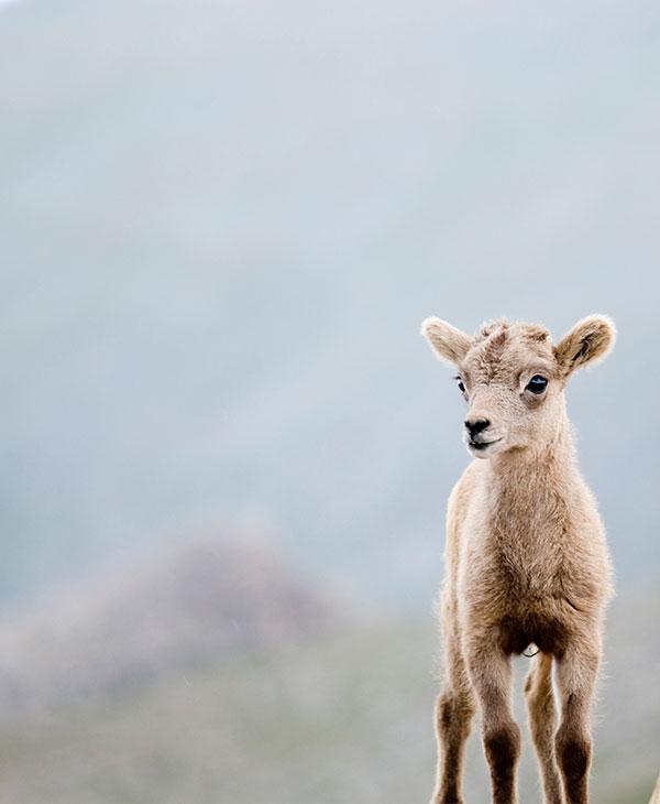cute_sheep2.jpg