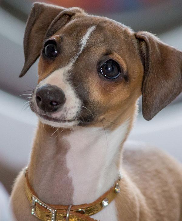 cute_dogbros3.jpg