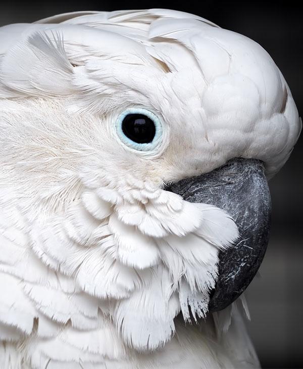 cute_animals_birds_2.jpg