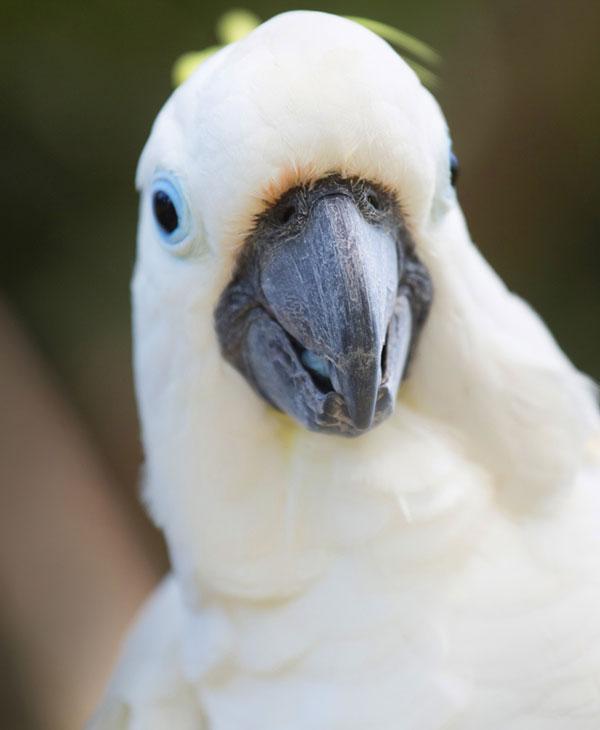 cute_animals_birds_3.jpg