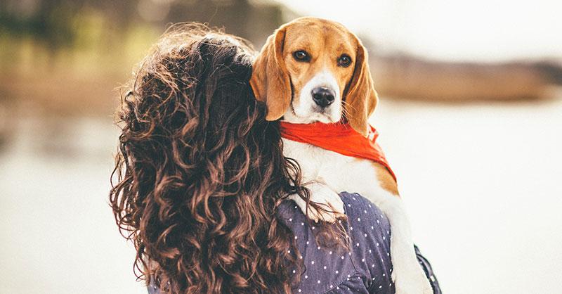 cute_beagleTHUMB.jpg