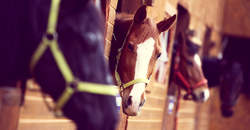 cute_horses_stalls.jpg