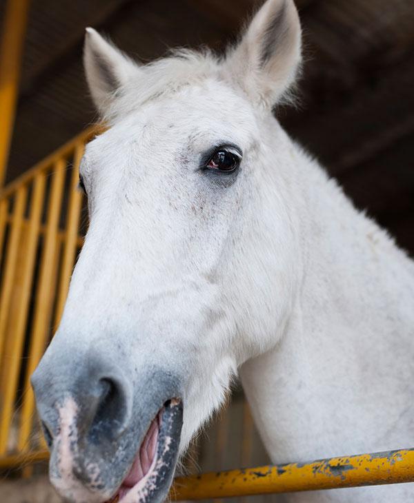 cute_horse.jpg