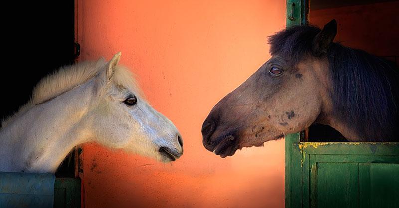 Cute_horse_thumb.jpg