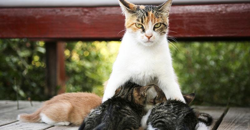 cute_cat_kittens.jpg