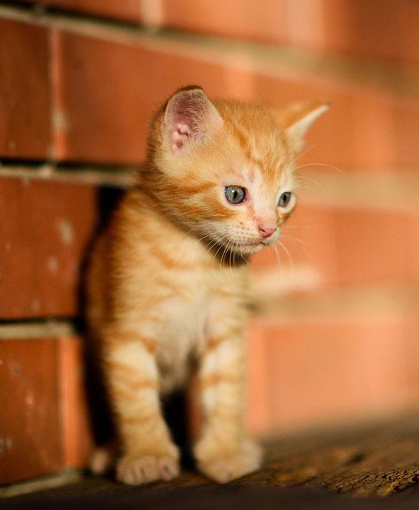 cute-kitten-by-brick-wall.jpg