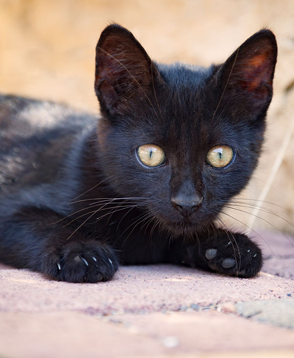 cute_blackkitten3.jpg