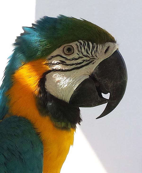 cute_pets_birds_2.jpg