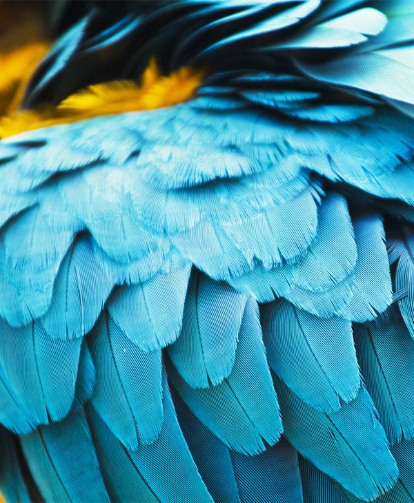 cute_pets_birds_3.jpg