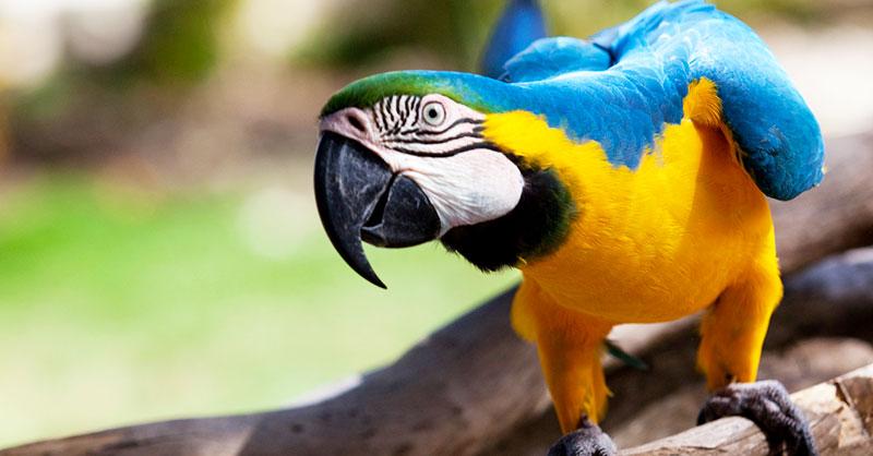cute_pets_birds_THUMB.jpg