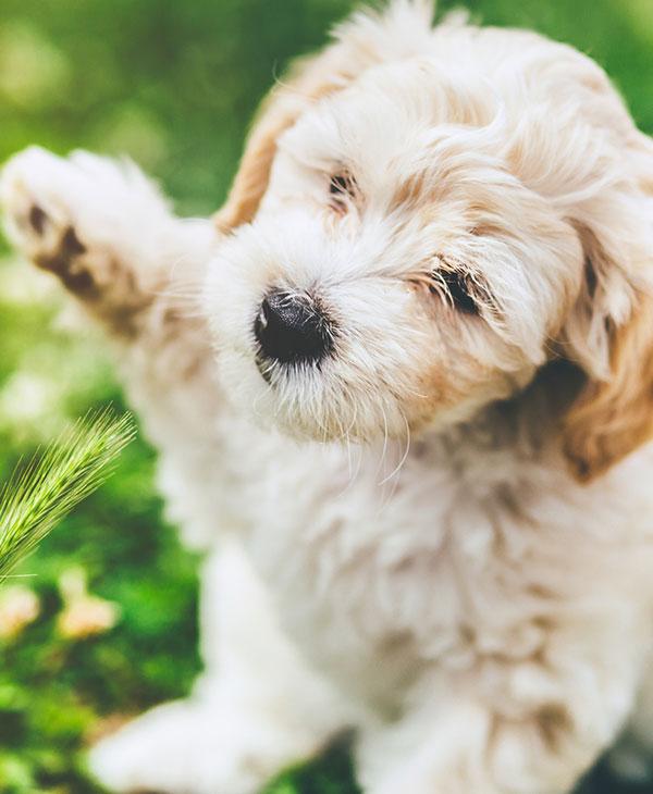cute_puppyrun1.jpg