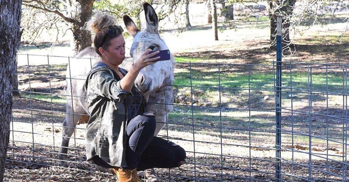 cute_donkey.jpg