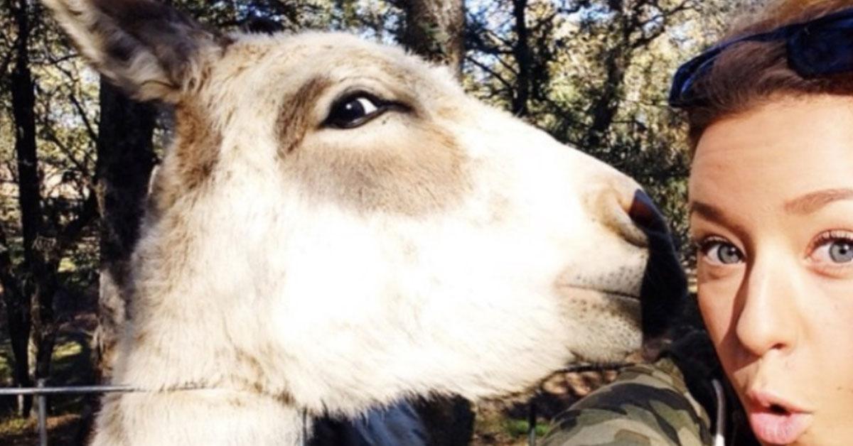 cute_donkey2_thumb.jpg