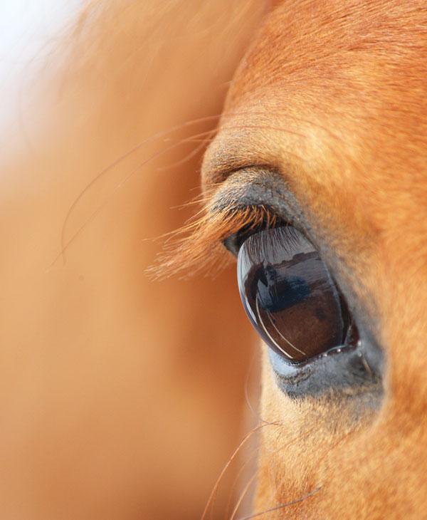 cute_animals_horses_3.jpg