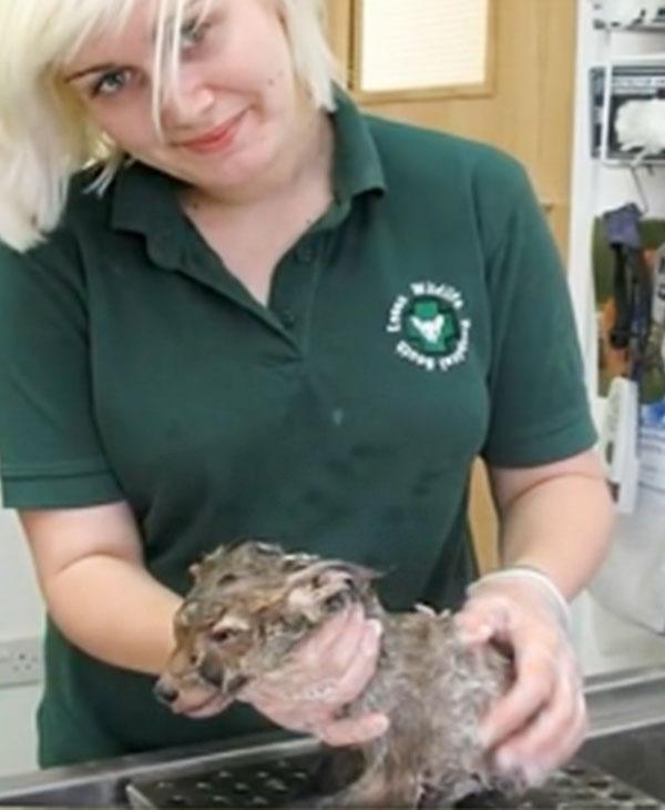 animal-pet-rescue-mud-cute.jpg
