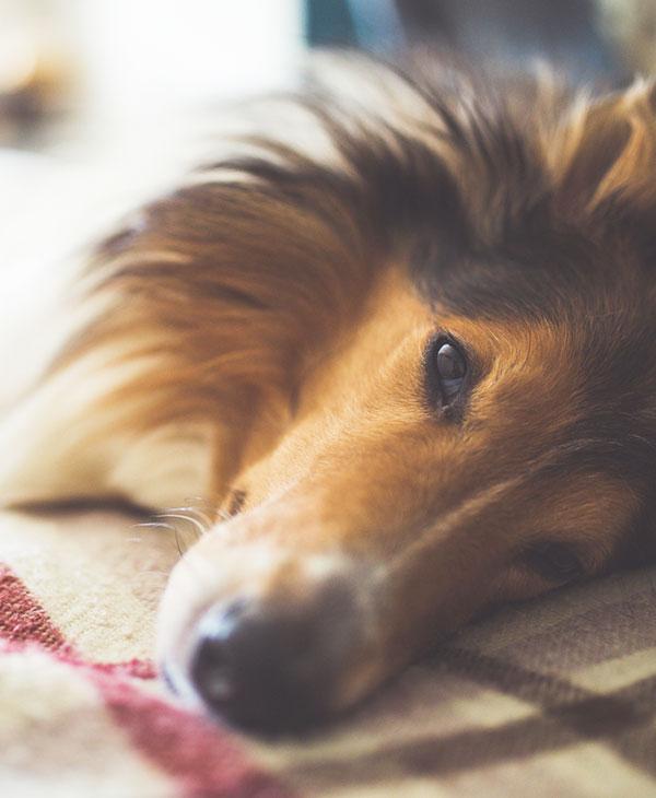 cute_dogs_pets_2.jpg