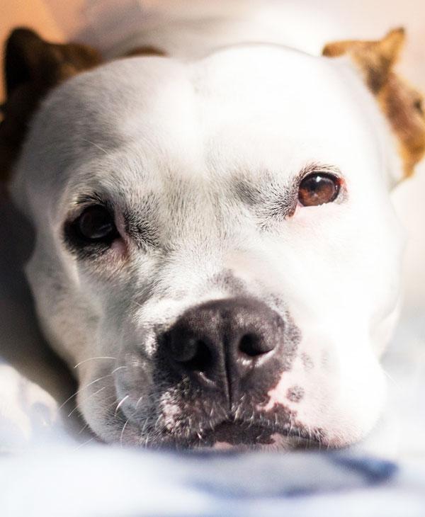 cute_dogs_pets_3.jpg