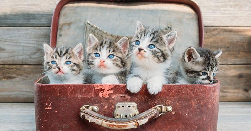 cute_kittens_suitcase.jpg