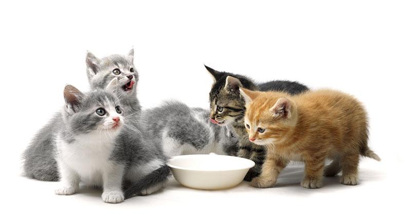 Cute_kitties.jpg