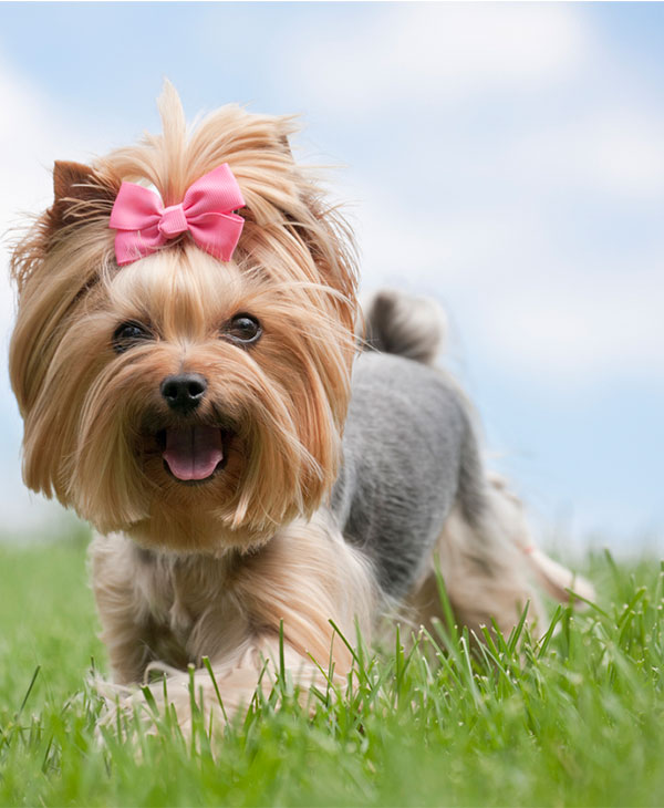 cute_animals_pets_2.jpg