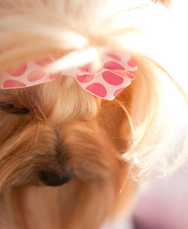 cute_animals_pets_3.jpg