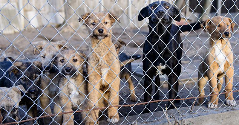 cute_rescue_dogs.jpg