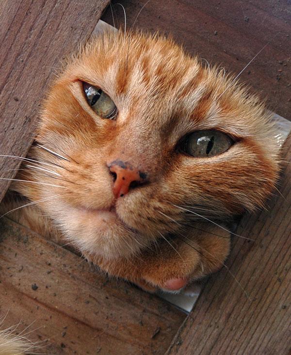 cute_kittyrescue_1.jpg