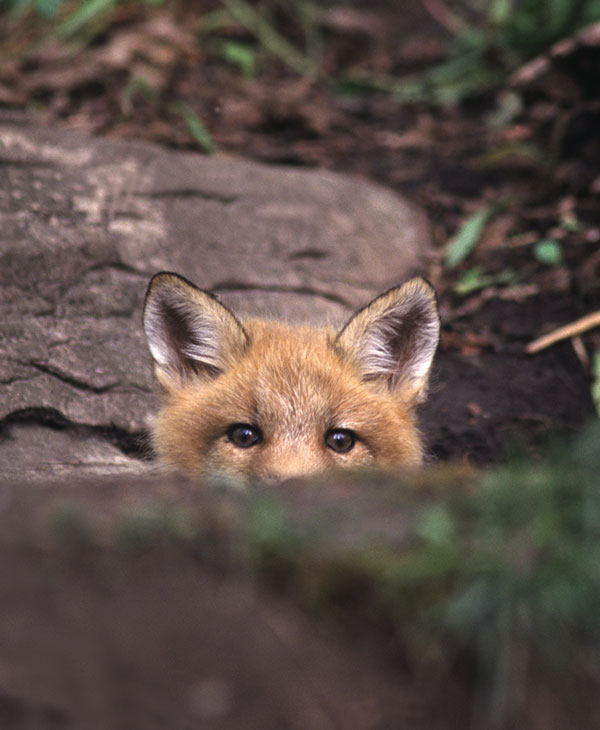 cute_kittyrescue_3.jpg