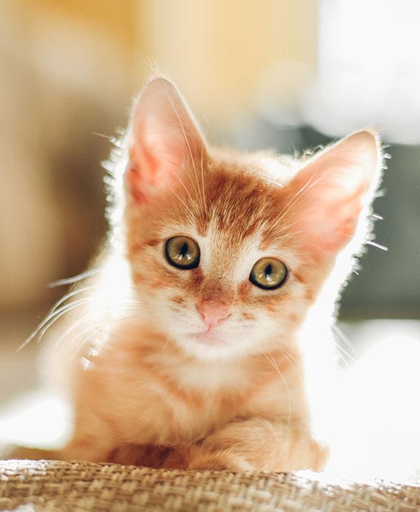 cute_embercat_2.jpg