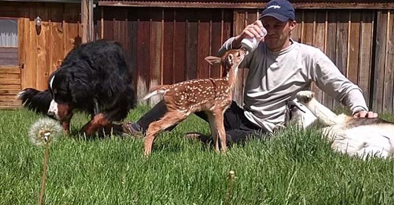 Cute_deer_family.jpg