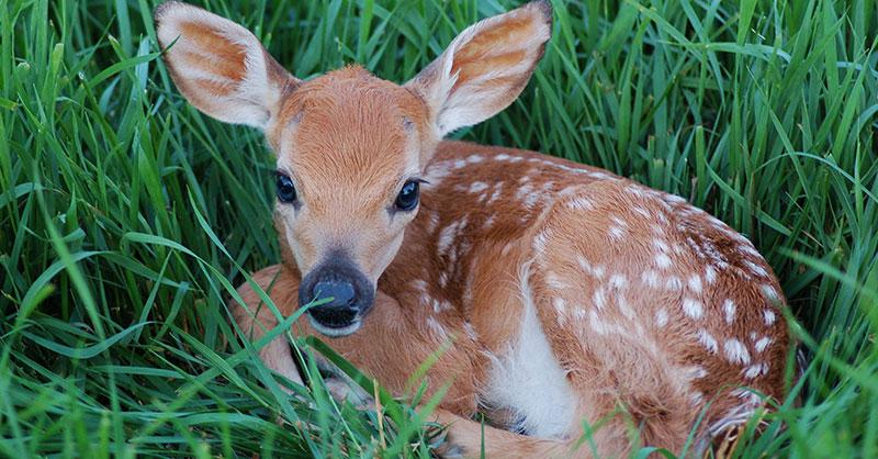 Cute_deer2.jpg