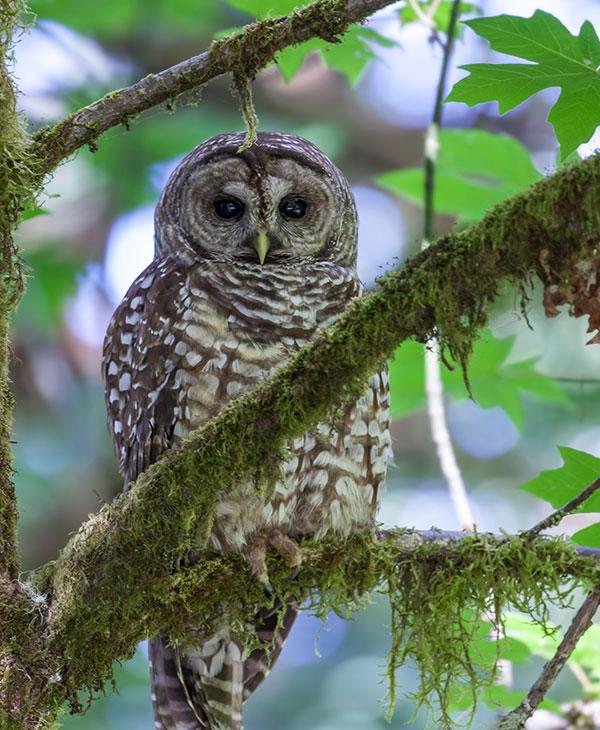 cute_owl.jpg