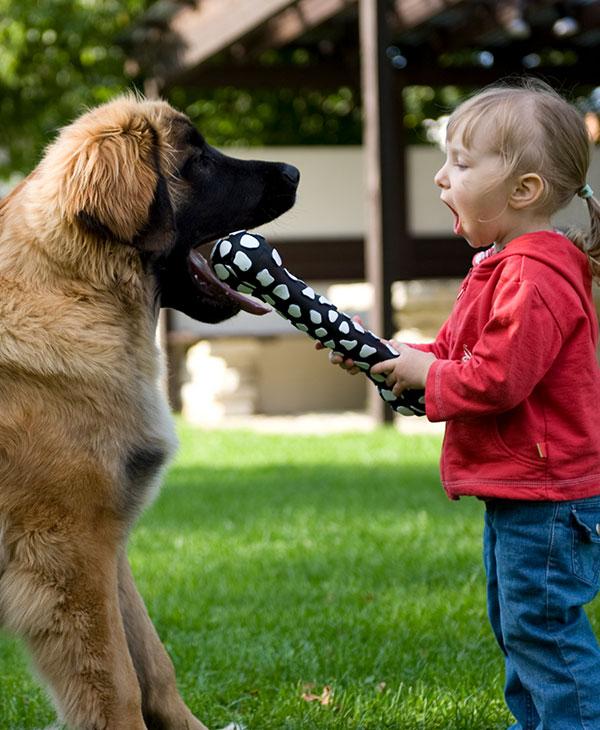 cute_puppy-last.jpg