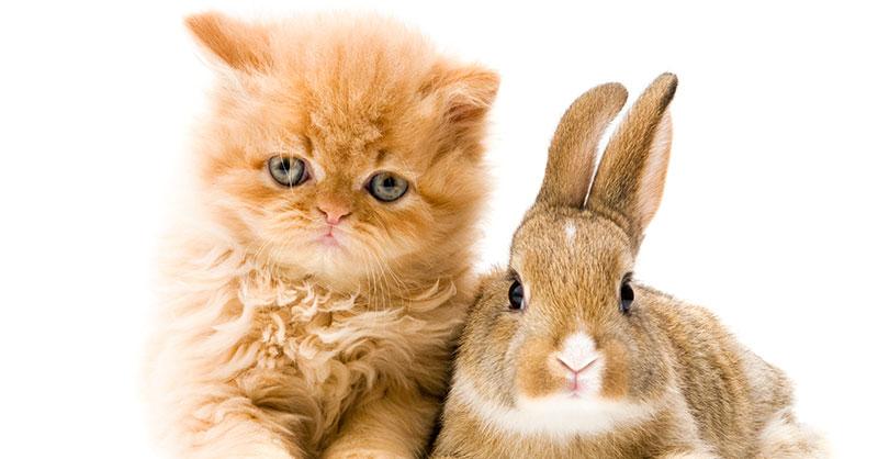 bunnykitthumb.jpg
