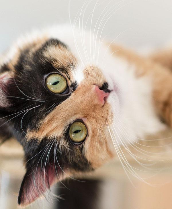cute_animals_pets_4.jpg