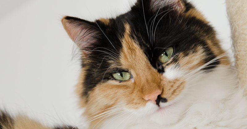cute_animals_pets_THUMB.jpg